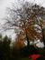 Hêtre d'Europe – Uccle, Avenue du Fort-Jaco, 46 –  14 Novembre 2013