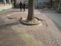 Ulmus glabra 'Pendula' – Schaerbeek, Avenue de Roodebeek, 61 –  20 Mars 2012
