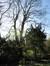 Erable sycomore – Woluwé-Saint-Lambert, Avenue Marie-José, 127 –  26 Mars 2012