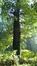 Chêne pédonculé – Uccle, Hippodrome de Boitsfort –  21 Octobre 2016