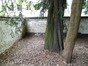 Charme commun – Uccle, Jardin privé rue Joseph Hazard , Rue Joseph Hazard –  08 Mai 2012