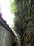 Venijnboom – Ukkel, Private tuin van Joseph Hazardstraat , Joseph Hazardstraat, 27 –  08 Mei 2012