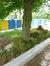 Hêtre d'Europe – Jette, Avenue de l'Arbre Ballon, 94 –  25 Mai 2016