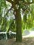 Saule pleureur – Bruxelles, Square Ambiorix, Marie Louise, Marguerite et avenue Palmerston, Square Marie-Louise –  23 Mai 2012