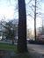 Noyer noir – Ixelles, Square de Meeûs sur Ixelles –  09 Février 2012