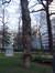 Acer pseudoplatanus f. aureovariegatum – Ixelles, Square de Meeûs sur Ixelles –  09 Février 2012