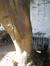 Erable sycomore – Ixelles, Rue du Tabellion, 88 –  26 Juillet 2012