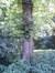 Orme hybride de Hollande – Bruxelles, Jardin du Pavillon Chinois –  23 Août 2012