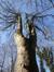 Erable sycomore – Uccle, Domaine Allard, Rue Victor Allard, 88 –  13 Février 2013
