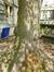 Tilleul commun – Bruxelles, Abords du bâtiment A de l'ULB, Avenue Franklin Roosevelt, 50 –  25 Avril 2013