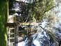 Cèdre bleu de l'Atlas – Jette, Parc Garcet –  27 Mai 2013