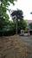 Araucaria du Chili – Ixelles, Avenue du Bois de la Cambre, 218 –  11 Août 2016
