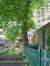 Platane à feuille d'érable – Schaerbeek, Rue des Palais –  12 Juillet 2013