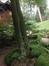 Erable palmé – Bruxelles, Jardin de la Tour Japonaise, Rue Jules Van Praet –  26 Juillet 2013