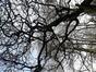 Magnolier de Soulange – Bruxelles, Jardin de la Tour Japonaise, Rue Jules Van Praet –  16 Mars 2020