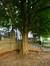 Marronnier jaune – Saint-Josse-Ten-Noode, Square Armand Steurs, Square Armand Steurs –  16 Août 2013