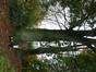 Hêtre pourpre – Berchem-Sainte-Agathe, Zavelenberg –  17 Octobre 2013