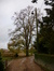 Tilleul à larges feuilles – Anderlecht, Drève Soetkin, 33 –  14 Novembre 2013