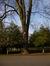 Tilleul argenté – Schaerbeek, Parc Josaphat, Avenue Ambassadeur van Vollenhoven –  22 Janvier 2014