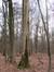 Frêne commun – Uccle, Forêt de Soignes, Boendael II –  01 Janvier 2014
