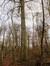Hêtre d'Europe – Uccle, Forêt de Soignes, Boendael IV –  01 Janvier 2014