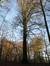 Beuk – Ukkel, Paardenrenbaan van Bosvoorde, Boendael V –  01 Januari 2014