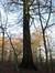 Hêtre d'Europe – Uccle, Hippodrome de Boitsfort, Boendael V –  01 Janvier 2014