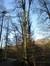 Hêtre d'Europe – Watermael-Boitsfort, Forêt de Soignes, Bonnier II –  01 Janvier 2014