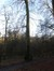 Hêtre d'Europe – Watermael-Boitsfort, Forêt de Soignes, Bonnier 0 –  01 Janvier 2014