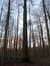 Hêtre d'Europe – Uccle, Forêt de Soignes, Infante VI –  01 Janvier 2014