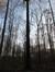 Hêtre d'Europe – Uccle, Forêt de Soignes, Infante VIII –  01 Janvier 2014