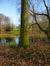 Hêtre pourpre – Schaerbeek, Parc Josaphat –  05 Février 2014