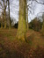 Platane à feuille d'érable – Schaerbeek, Parc Josaphat –  05 Février 2014