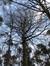 Hêtre d'Europe – Uccle, Forêt de Soignes, Saint-Hubert VI –  01 Janvier 2014
