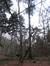Charme commun – Uccle, Forêt de Soignes, Saint-Hubert VI –  01 Janvier 2014