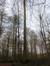 Hêtre d'Europe – Uccle, Forêt de Soignes, Saint-Hubert III –  01 Janvier 2014