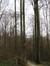 Beuk – Ukkel, Zoniënwoud, Saint-Hubert VII –  01 Januari 2014