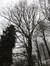 Chêne pédonculé – Uccle, Forêt de Soignes, Saint-Hubert V –  01 Janvier 2014