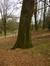 Tilleul argenté – Schaerbeek, Parc Josaphat –  17 Mars 2014