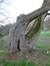 Erable plane – Schaerbeek, Parc Josaphat –  25 Mars 2014