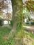 Hêtre pourpre – Anderlecht, Parc central et Jardin de la maison d'Erasme  –  28 Avril 2014