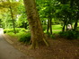 Platane à feuille d'érable – Schaerbeek, Parc Josaphat –  13 Mai 2014