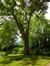 Erable argenté – Woluwé-Saint-Pierre, Parc Parmentier, Chemin de Ronde, 396 –  20 Mai 2014