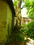 Erable à feuilles de frêne – Woluwé-Saint-Pierre, Parc Parmentier –  20 Mai 2014