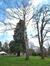 Bouleau verruqueux – Woluwé-Saint-Pierre, Parc Parmentier –  13 Avril 2021