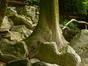 Sapin de Vancouver – Schaerbeek, Parc Josaphat –  14 Mai 2014
