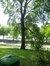 Peuplier tremble – Woluwé-Saint-Pierre, Parc Parmentier, Avenue de Tervueren –  03 Juin 2014