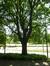 Chêne pédonculé – Woluwé-Saint-Pierre, Parc Parmentier, Avenue de Tervueren –  03 Juin 2014