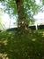 Platane à feuille d'érable – Woluwé-Saint-Pierre, Parc Parmentier, Chemin de Ronde –  03 Juin 2014