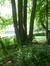 Châtaignier – Woluwé-Saint-Pierre, Parc Parmentier, Avenue de Tervueren –  03 Juin 2014